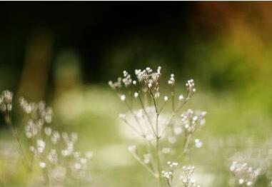 春季是腋臭的高发期
